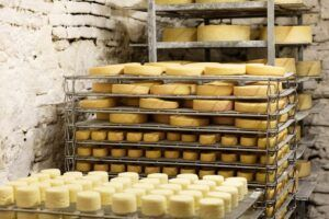 Raw milk cheese versus pasteurized milk cheese - surface ripened aging cheese